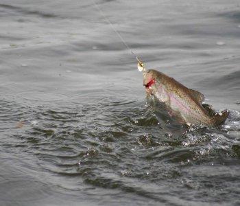 Как ловить форель?
