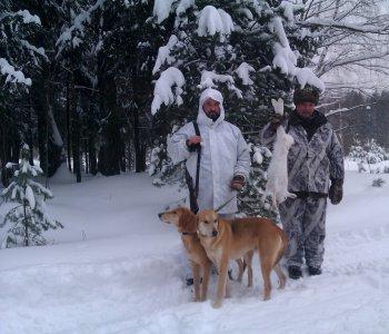 Охота с гончими: увлекательное и полезное хобби